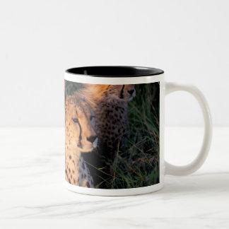 Africa, Kenya, Masai Mara Game Reserve. Cheetah 2 Mug