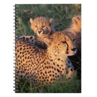 Africa, Kenya, Masai Mara Game Reserve. Cheetah 2 Notebook