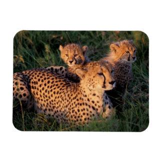 Africa, Kenya, Masai Mara Game Reserve. Cheetah 2 Rectangle Magnet