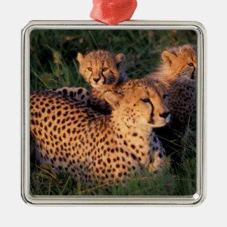 Africa, Kenya, Masai Mara Game Reserve. Cheetah 2 Silver-Colored Square Decoration