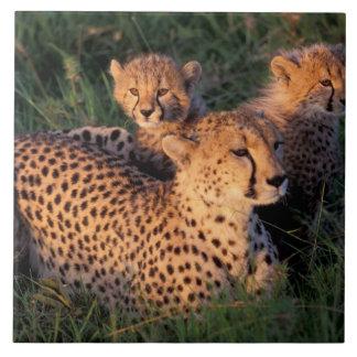 Africa, Kenya, Masai Mara Game Reserve. Cheetah 2 Tile