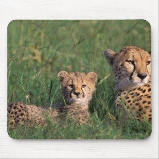 Africa, Kenya, Masai Mara Game Reserve. Cheetah Mousepad