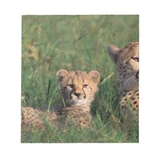 Africa, Kenya, Masai Mara Game Reserve. Cheetah Notepad