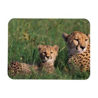 Africa, Kenya, Masai Mara Game Reserve. Cheetah Flexible Magnets