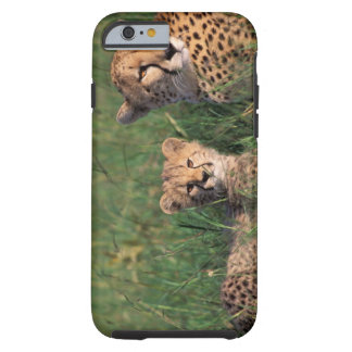 Africa, Kenya, Masai Mara Game Reserve. Cheetah Tough iPhone 6 Case