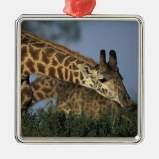 Africa, Kenya, Masai Mara Game Reserve, Giraffes Silver-Colored Square Decoration