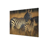 Africa, Kenya, Masai Mara Game Reserve. Plains Gallery Wrap Canvas