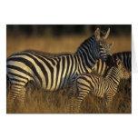 Africa, Kenya, Masai Mara Game Reserve. Plains Card