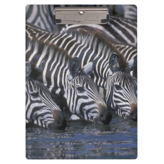 Africa, Kenya, Masai Mara Game Reserve, Plains Clipboard