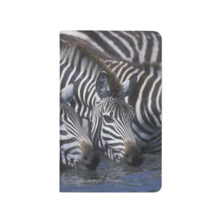 Africa, Kenya, Masai Mara Game Reserve, Plains Journal