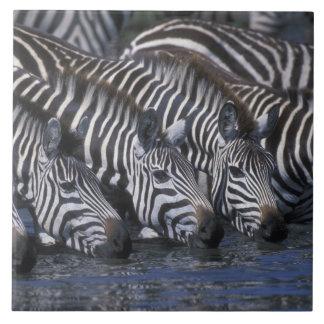 Africa, Kenya, Masai Mara Game Reserve, Plains Large Square Tile
