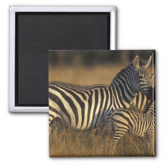 Africa, Kenya, Masai Mara Game Reserve. Plains Magnet