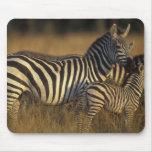 Africa, Kenya, Masai Mara Game Reserve. Plains Mouse Pad