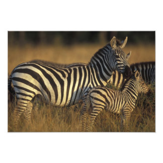 Africa, Kenya, Masai Mara Game Reserve. Plains Art Photo