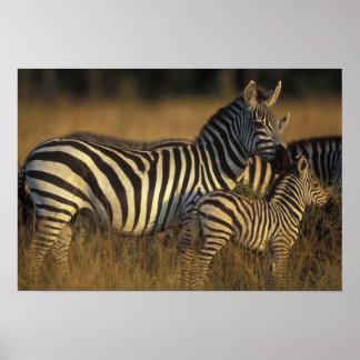 Africa, Kenya, Masai Mara Game Reserve. Plains Print