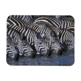 Africa, Kenya, Masai Mara Game Reserve, Plains Vinyl Magnet