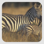Africa, Kenya, Masai Mara Game Reserve. Plains Square Stickers