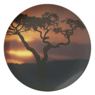 Africa, Kenya, Masai Mara Game Reserve, Setting Party Plates