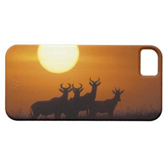 Africa, Kenya, Masai Mara Game Reserve, Topi iPhone 5 Cover