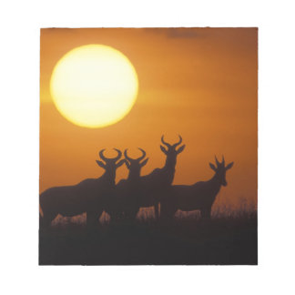 Africa, Kenya, Masai Mara Game Reserve, Topi Notepad