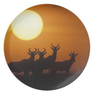 Africa, Kenya, Masai Mara Game Reserve, Topi Plates