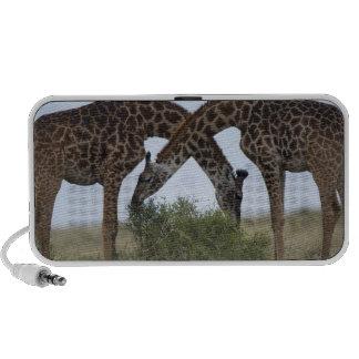 Africa, Kenya, Masai Mara Game Reserve, Two PC Speakers