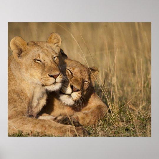 Africa, Kenya, Masai Mara Game Reserve, Young Poster