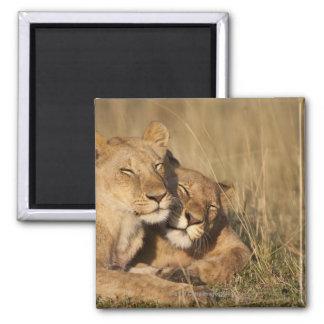 Africa, Kenya, Masai Mara Game Reserve, Young Square Magnet
