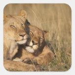 Africa, Kenya, Masai Mara Game Reserve, Young Square Sticker
