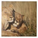 Africa, Kenya, Masai Mara Game Reserve, Young Tile