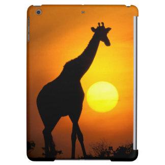 Africa, Kenya, Masai Mara. Giraffe (Giraffe