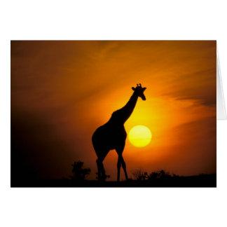 Africa, Kenya, Masai Mara. Giraffe (Giraffe Card