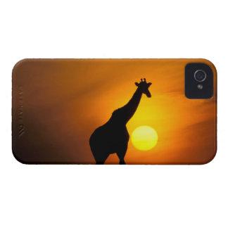 Africa, Kenya, Masai Mara. Giraffe (Giraffe Case-Mate iPhone 4 Case