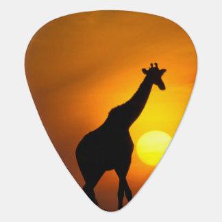 Africa, Kenya, Masai Mara. Giraffe (Giraffe Guitar Pick
