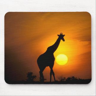Africa, Kenya, Masai Mara. Giraffe (Giraffe Mouse Mat