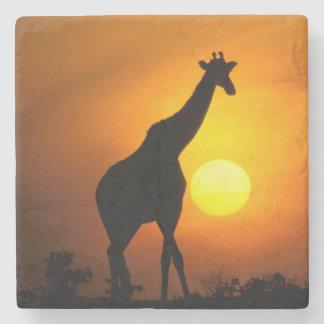 Africa, Kenya, Masai Mara. Giraffe (Giraffe Stone Coaster