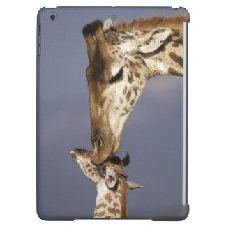 Africa, Kenya, Masai Mara. Giraffes (Giraffe