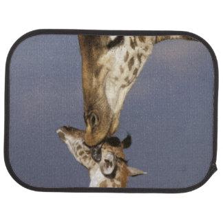 Africa, Kenya, Masai Mara. Giraffes (Giraffe Car Mat