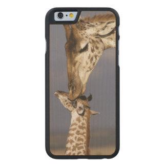 Africa, Kenya, Masai Mara. Giraffes (Giraffe Carved® Maple iPhone 6 Case