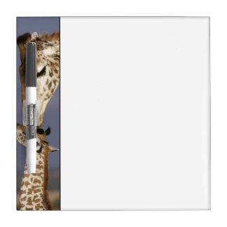 Africa, Kenya, Masai Mara. Giraffes (Giraffe Dry Erase Board