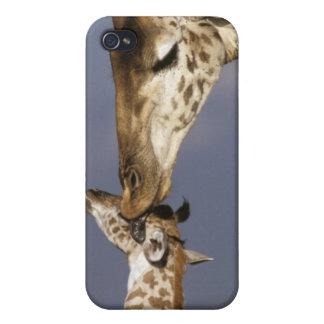 Africa, Kenya, Masai Mara. Giraffes (Giraffe iPhone 4/4S Case