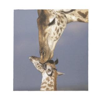 Africa, Kenya, Masai Mara. Giraffes (Giraffe Notepad