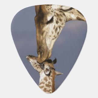 Africa, Kenya, Masai Mara. Giraffes (Giraffe Plectrum