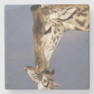 Africa, Kenya, Masai Mara. Giraffes (Giraffe Stone Coaster