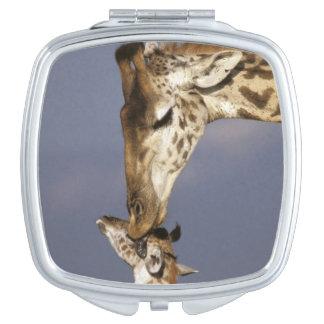 Africa, Kenya, Masai Mara. Giraffes (Giraffe Travel Mirrors