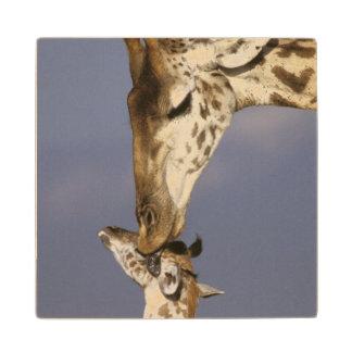 Africa, Kenya, Masai Mara. Giraffes (Giraffe Wood Coaster