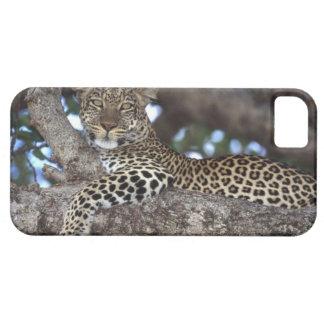 Africa. Kenya. Masai Mara. Leopard (Panthera iPhone 5 Cover
