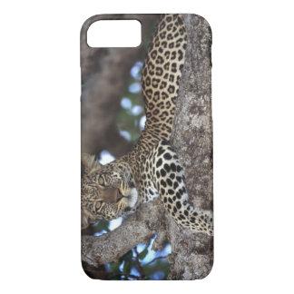 Africa. Kenya. Masai Mara. Leopard (Panthera iPhone 8/7 Case