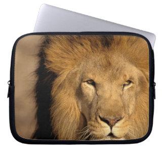 Africa, Kenya, Masai Mara. Lion male (Panthera Laptop Sleeve