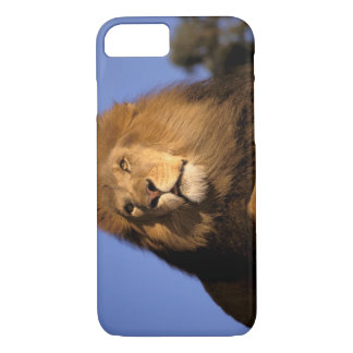 Africa, Kenya, Masai Mara. Male lion (Panthera iPhone 8/7 Case